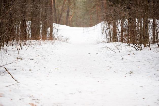 Тропинка в зимнем лесу с соснами