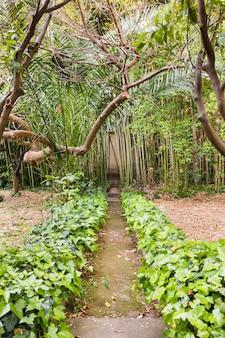 熱帯雨林の足跡