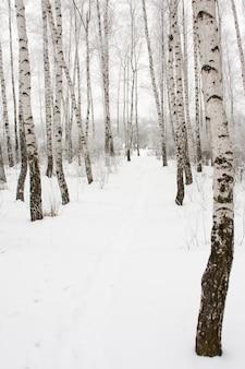 冬の森の小道