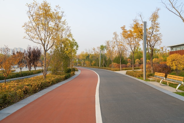 Footpath in the park in autumn