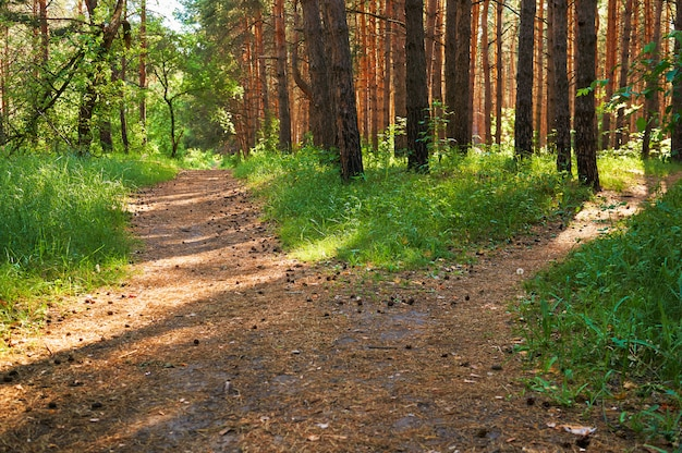 Footpath for people in the green forest.