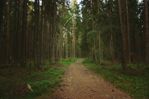 針葉樹のトウヒの森に伸びる歩道。