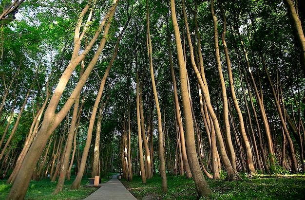 ブナの木の自然林を通る歩道。自然の写真