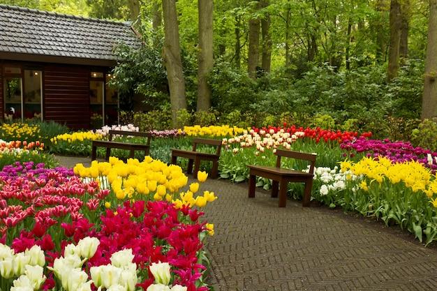 カラフルな春の庭、キューケンホフ、オランダのベンチと歩道