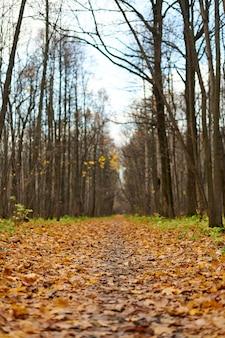 森の落ち葉の小道