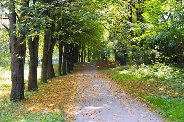 Тропинка с желтыми листьями на земле в парке