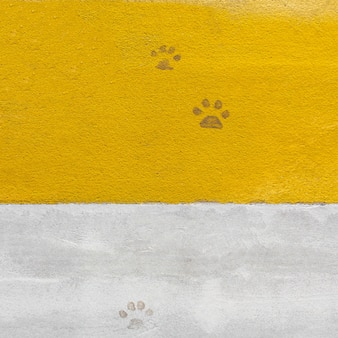 Footprint of dirty dog paws on a pedestrian crossing