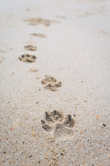 The footprint of the dog walking on the beach.
