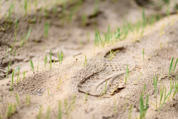 След в песчаном поле с травой.