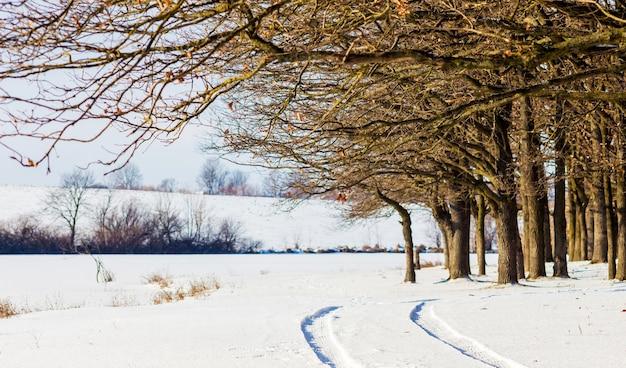 Следы от машины на снегу на окраине леса_