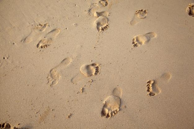 浜の砂の足跡