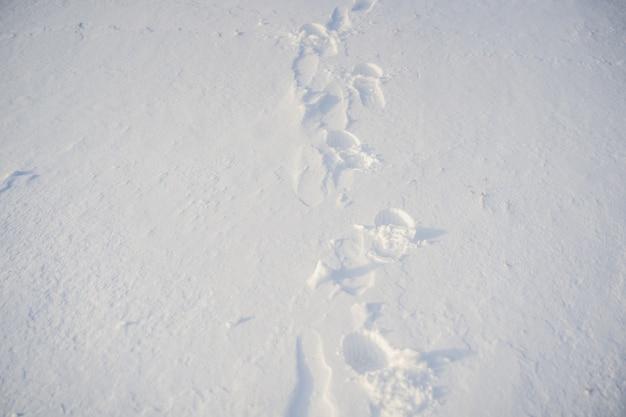 雪の中の足跡。冬の雪の背景