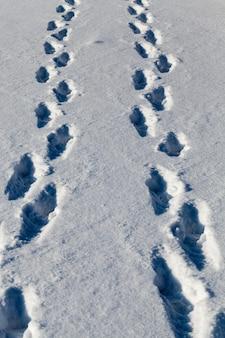 雪の中の足跡