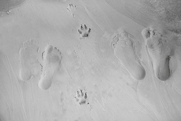 젖은 해변 모래에 인간의 발과 개 발의 발자국