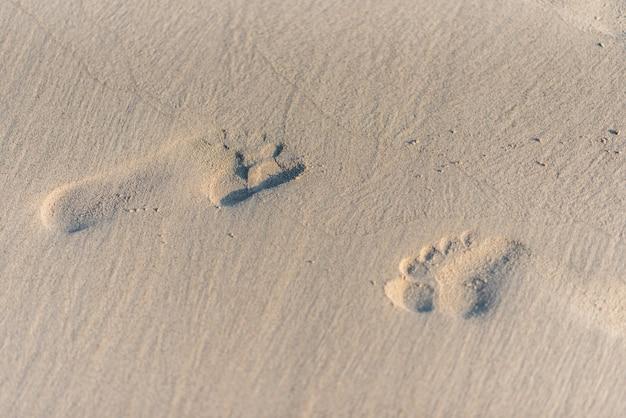 日光とビーチの砂の上の足跡