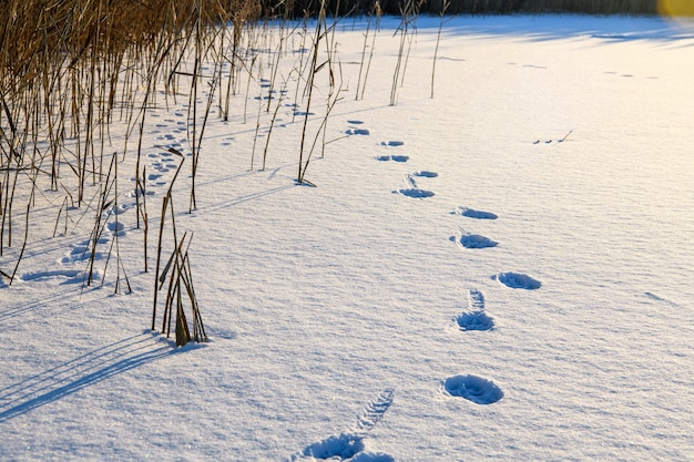 Footprints of shoe sole and animals on the white snow