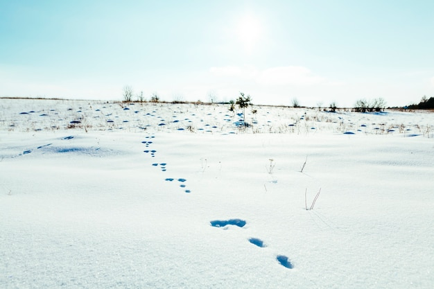 Footprints in the snowy landscape with blue sky