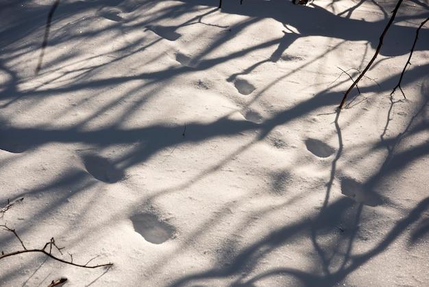 Следы на снегу в солнечный зимний день