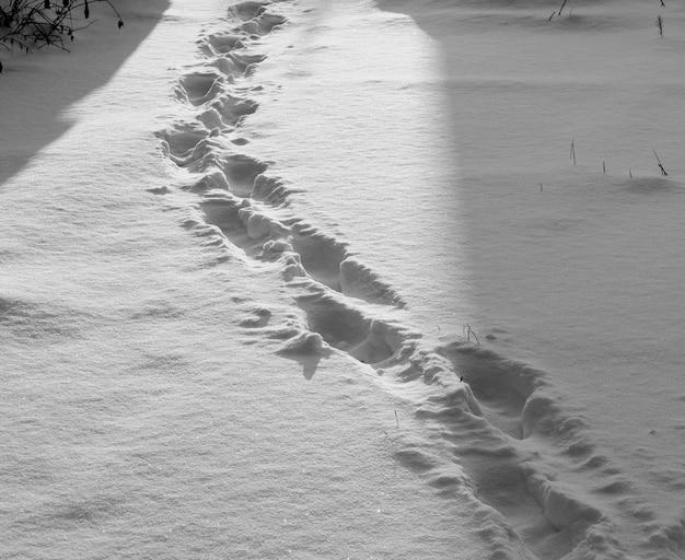 Шаги по снегу