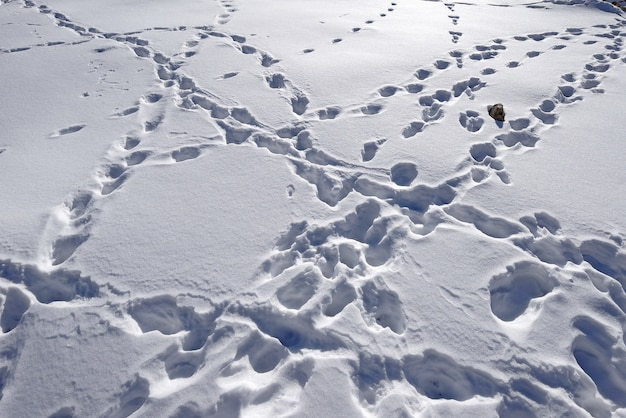 Footsteps on the snow. leh, india.