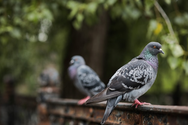In the foreground, a dove sits on the fence and looks to the side