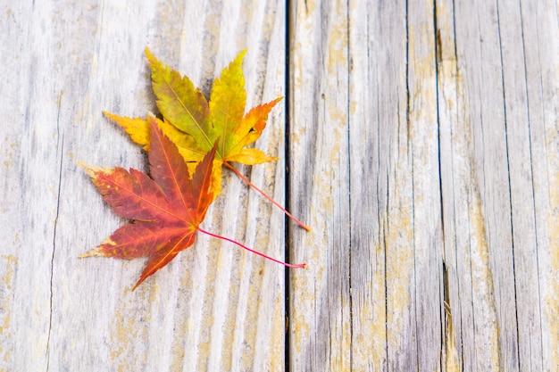 前景の楓の秋の木の色