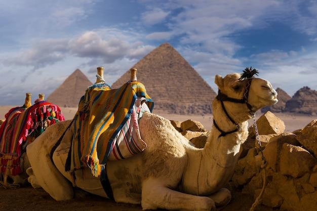 大ピラミッドを背景にしたラクダのヒトコブラクダの前景