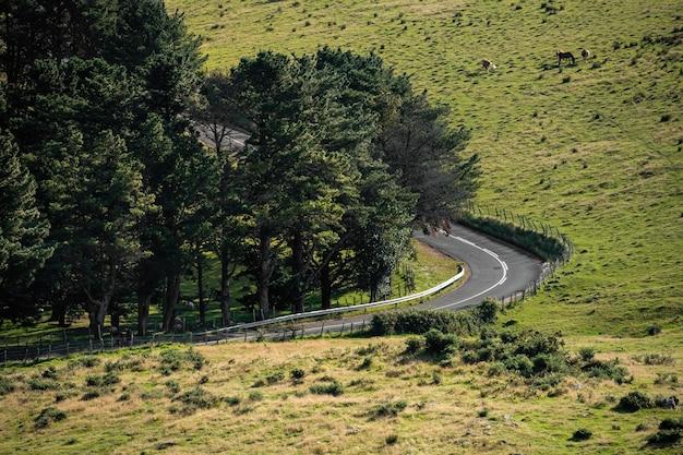 左折する森と田舎の道。馬の放牧と緑の牧草地。スペイン、バスク国