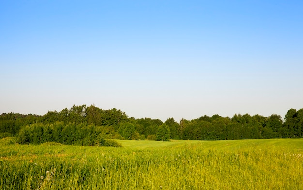 丘陵の緑の領域、夏の風景に生えている森と個々の木