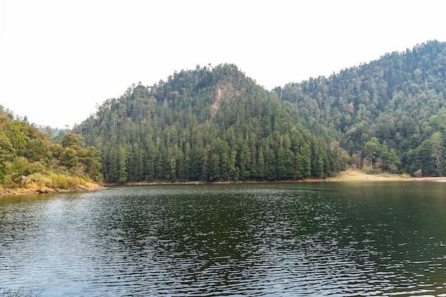 Лес и озеро пасмурный день сцена