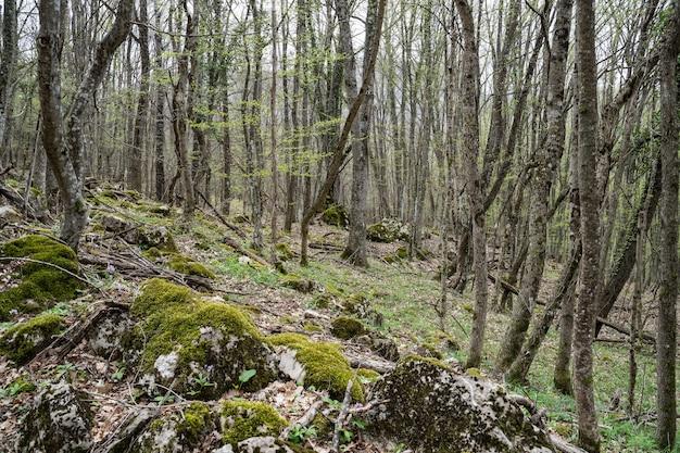 숲 풍경 신선한 숲 공기 숲의 황야 주변의 모든 숲과 이끼 얇은 나무