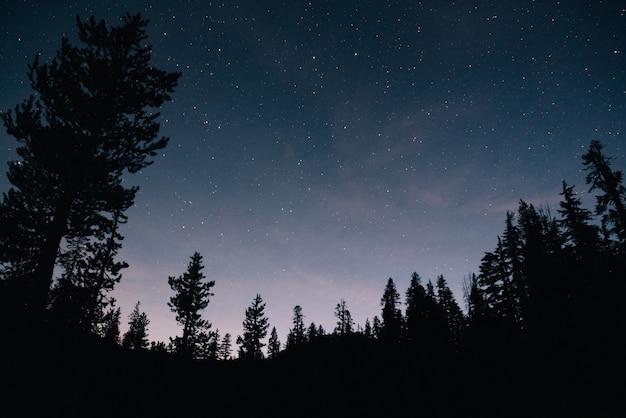 숲과 밤의 별이 빛나는 하늘