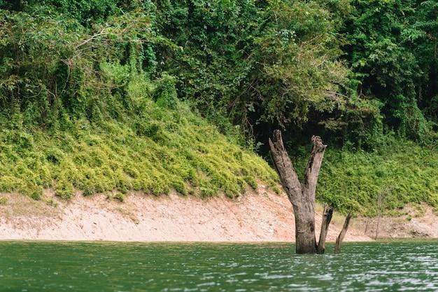 ハラバラ野生生物保護区での森林と水の風景