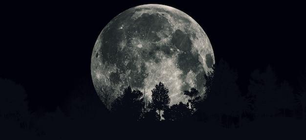 밤에 숲 보름달 어둡고 무서운 그림 파노라마 프리미엄 사진