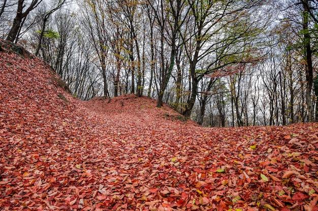 倒れた枯れた森林の秋は地面にオレンジを残します。