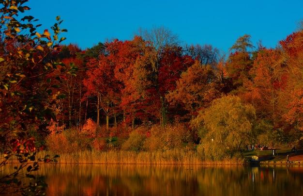 日中の水域の横にある森