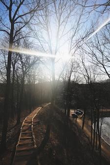 Forest bridge and sunlight