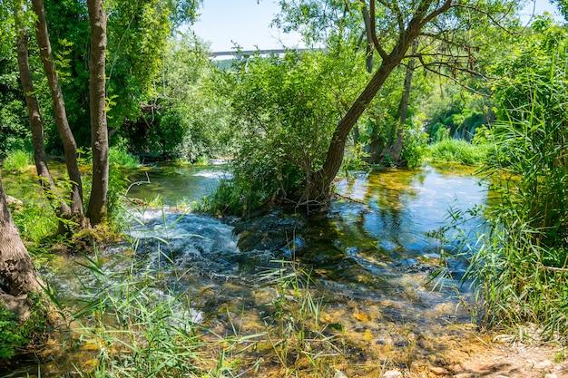 Лесной ручей течет среди стволов деревьев и падает с высокого водопада.