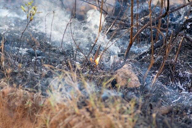 Forest burning. brazilian amazon in flames