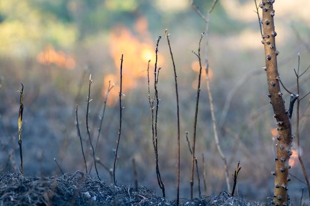 Горящий лес. бразильская амазонка в огне