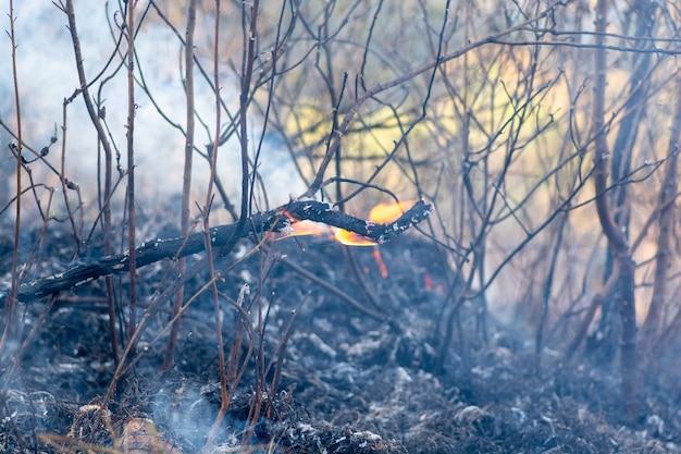 Горящий лес, бразильский лес в огне. крупным планом.
