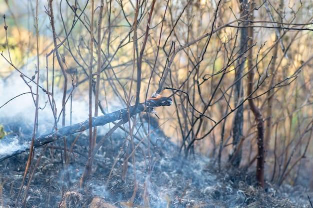 Горящий лес, бразильский лес в огне
