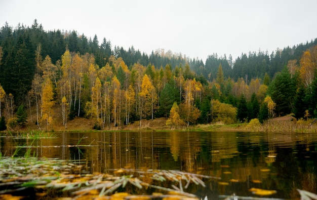 Forest by the lake in autumn, poland