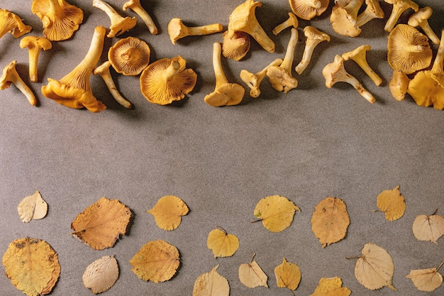 Forest chanterelle mushrooms