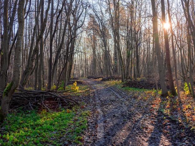 森林清掃。朝の春の森を抜ける道。枯れ木の森を一掃する春。