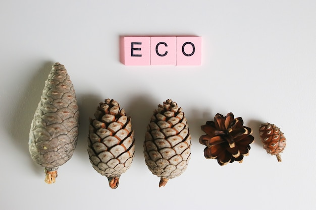 Forest cones on a white background, ecology concept.
