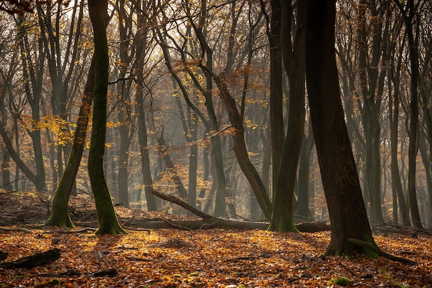 Forest covered in dry leaves and trees under the sunlight during the autumn