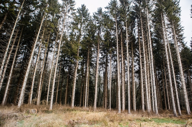Foresta ricoperta di erba circondata da alberi ad alto fusto sotto un cielo nuvoloso