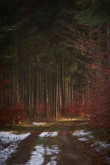 Foresta coperta di verde e foglie rosse con un sentiero coperto di neve
