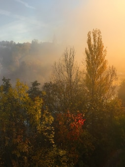 霧に覆われた森